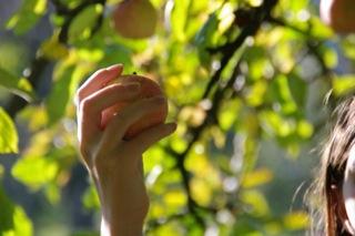cueille la pomme