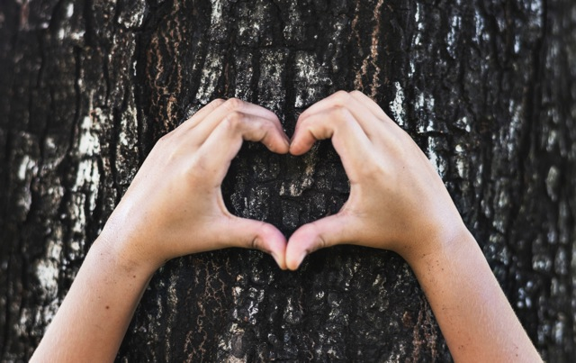deux mains formant un coeur sur un tronc d'arbre